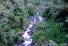 Gattey Khola in Panglakha forest