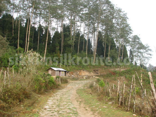 Ganktok India  City new picture : Sillery Gaon | Sikkim Silk Route